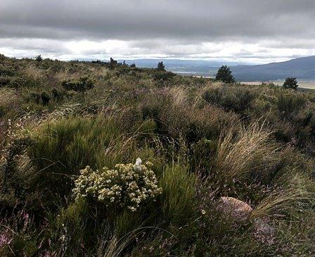 ania-starmach-nowa-zelandia17